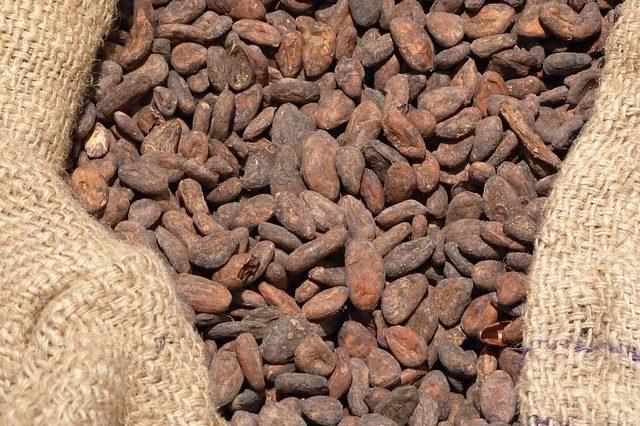 Cacao chocolatier